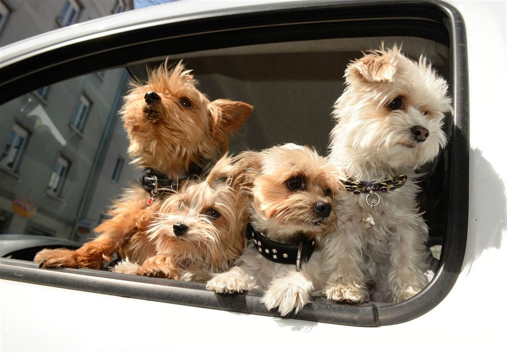 Are Rental Cars Pet-Friendly?